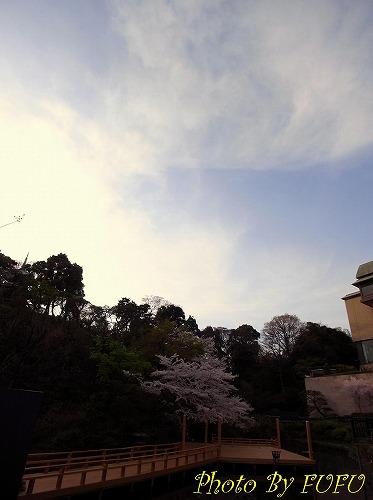 椿山荘桜1.jpg